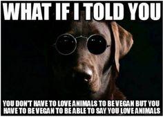 What if I told you you don't have to love animals to be vegan but you have to be vegan to be able to say you love animals / vegan meme / matrix / vegan humor / vegan lifestyle / veganism