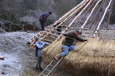 Re-thatching the Iron Age House at Chiltern Open Air Museum