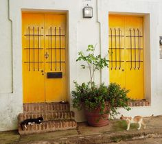 Two street cats meet in front of two colorful doors in Old San Juan, Puerto Rico | Letters from abroad: Puerto Rico and Old San Juan | Changing Pages #Travel #Photography | BL | Black Lion Journal | Black Lion