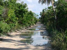 Xcalak, Q. Roo - Beach Road