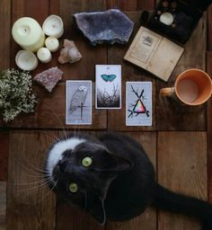 tarot reading with your familiar :)    Shared by www.thecrystalgridnetwork.com