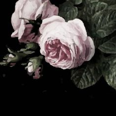 Rose Wallpaper, Canvas Designs, Vintage Roses, Floral Fabric, Custom Fabric, Spoonflower, Peonies, Cotton Canvas, Craft Projects