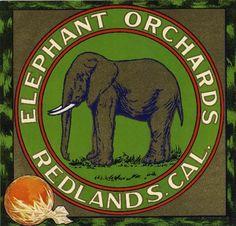 Villa Park /& Redlands Elephant Orange Citrus Fruit Crate Label Vintage Art Print