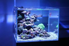Saltwater Aquarium - Find incredible deals on Saltwater Aquarium and Saltwater Aquarium accessories. Let us show you how to save money on Saltwater Aquarium NOW! Saltwater Aquarium Setup, Coral Reef Aquarium, Saltwater Fish Tanks, Nano Aquarium, Home Aquarium, Aquarium Design, Marine Aquarium, Aquarium Fish Tank, Nano Reef Tank