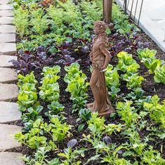 culinary-2 Rogers Gardens, Homekeeping, Grow Your Own Food, Urban Farming, Garden Styles, Garden Inspiration, Gardening, Display, Plants