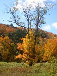 Gatineau Park Quebec Canada