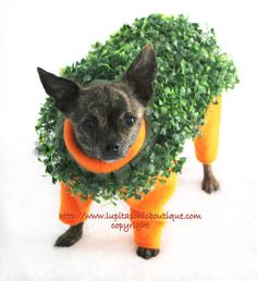 Terracotta Chia Pet Dog by LupitasChicBoutique. This is the most original Halloween costume I have ever seen for a pet. The foliage is removable, but why would you?