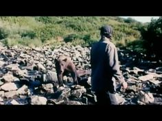 Grizzly Man Trailer HD.    Grizzly man was a movie released in 2005 that chronicled one man's 10+ year routine of traveling to one part of Alaska to spend time with the same Grizzly bears every year. He was able to do this for so long by setting clear rules and guidelines and following them. Unfortunately, this man was not a scientist and seemed to be somewhat mentally unstable. He eventually broke his rules and was eaten, but it's a fascinating tale of human bear interaction non-the-less.