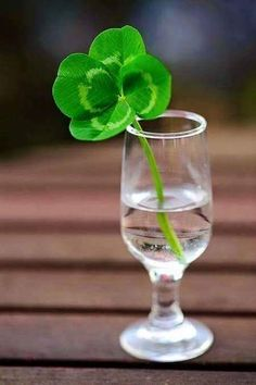 Inviting Home InspiredGood luck Good health Happiness and Love Today and every day Inviting Home, Four Leaves, Irish Eyes, Irish Blessing, Happy St Patricks Day, Luck Of The Irish, Four Leaf Clover, Shades Of Green, Color Splash