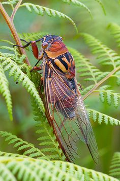 Explore SPointr's photos on Flickr. SPointr has uploaded 169 photos to Flickr. Cicada
