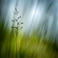 Framed Photographic Print: Morning Grass by Ursula Abresch :