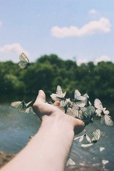 #butterfly #wonderful #amazing #picture #crazy