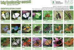 Butterfly Detective Identification