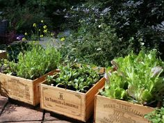 Repurpose old wooden crates as gardening beds.