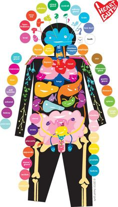 All you need to know about human anatomy :) m школа, биология, наука. Science Classroom, Teaching Science, Science For Kids, Life Science, Teaching Tools, Science Activities, Science Projects, Science Experiments, Activities For Kids