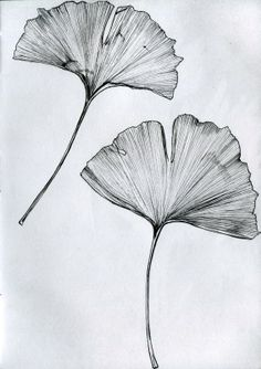 Ginkgo leaf drawing Ginkgo tree tattoo - tree sheet drawing Best Picture For inspirational tattoo For Your Taste Y - Et Tattoo, Tattoo Drawings, Art Drawings, Tattoo Tree, Sketch Tattoo, Blatt Tattoos, Leaves Sketch, Arte Sketchbook, Japanese Tattoo Designs