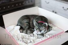 Tabby cat cake - Cake by Hannah