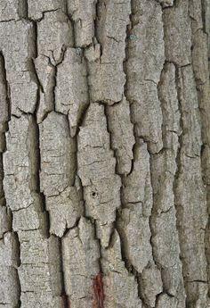 Textures. Texturas