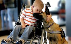 7 Incredible and Unlikely Ways Service Dogs Save Humans Everyday