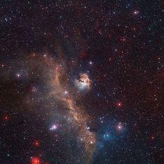 Il gabbiano cosmico - Focus.it