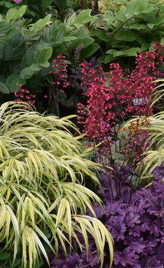 The top 8 Perennials for a shade garden. Plant Paradise Country Gardens botanical garden.