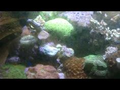 15year old reef tank jam packed with coral, rarely maintained