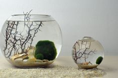 Marimo Japanese Moss Ball Aquarium with Giant by PinkSerissa