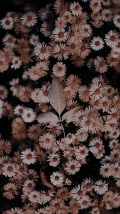 Wallpaper Tumblr Lockscreen, Iphone Homescreen Wallpaper, Abstract Iphone Wallpaper, Iphone Wallpaper Tumblr Aesthetic, Iphone Background Wallpaper, Scenery Wallpaper, Aesthetic Wallpapers, Wallpaper Nature Flowers, Sunflower Wallpaper