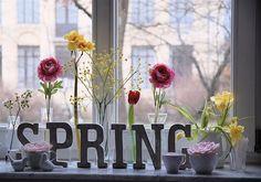"tinywhitedaisies: "" pughs-news: "" madamecupcake: "" stephaniehowell: "" (via moline) "" "" My favourite season. Spring Fair, Spring Time, Spring Ahead, Happy Spring, Quiet Storm, Welcome Spring, Spring Has Sprung, Four Seasons, Spring Flowers"
