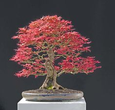 Walter Pall Bonsai Adventures: change of position
