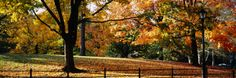 Trees in a Forest, Central Park, Manhattan, New York City, New York, USA Wall Decal at Art.com
