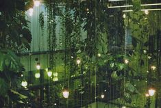 Vines and lights {such a lovely atmosphere}