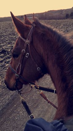 3 takes a look at the key thinks your need to consider to perfect… – Art Of Equitation Horse Photos, Horse Pictures, Cute Horses, Beautiful Horses, Cavalo Wallpaper, Foto Snap, Country Best Friends, Animals And Pets, Cute Animals