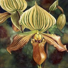 "ARTFINDER: Ladyslipper orchid by Alfred  Ng - original watercolor painting on arches watercolor paper, 20""x20"""