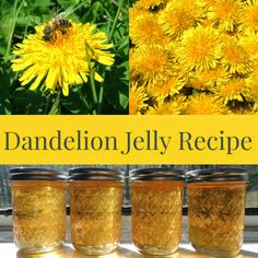 Linn Acres Farm: Dandelion Jelly Recipe. How to make a delicious homemade jelly from foraging dandelion flowers.
