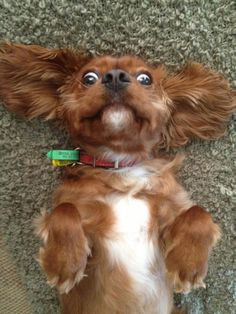 Here comes the belly rubs!
