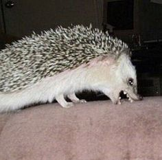 beware for the hog from hell will consume us all Meme Chat, Funny Images, Funny Pictures, Le Zoo, Gato Gif, Cursed Images, Stupid Memes, Dankest Memes, Cute Funny Animals