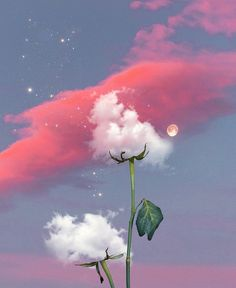 Night Sky Wallpaper, Scenery Wallpaper, Cute Wallpaper Backgrounds, Pretty Wallpapers, Galaxy Wallpaper, Aesthetic Photography Nature, Nature Aesthetic, Flower Aesthetic, Nature Photography
