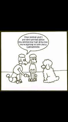 I love poodles.