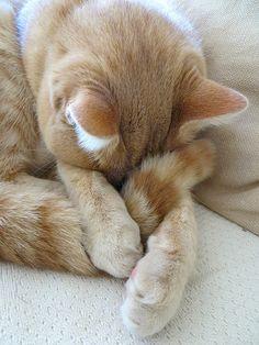IMG_1497 by straycatspotter, via Flickr