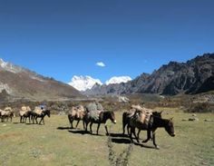 Ponys befördern Lasten nahe des Keche La