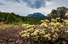 Neuer State Park in Colorado: Fishers Peak - The Chill Report Trinidad, Colorado, Rocky Mountains, Santa Fe, New Mexico, State Parks, Vineyard, Chill, Country Roads