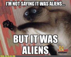 history channel aliens funny cat - Dump A Day Funny Shit, Funny Cats, Funny Animals, Funny Stuff, Funniest Animals, Animal Memes, Funny Things, Animal Quotes, Cat Stuff