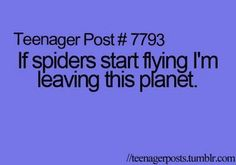 I would actually probably start a business that's main purpose was to destroy these flying spiders!