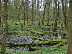 Poděbradský lužní les floodplain forest Podebrady -  Czech Republic
