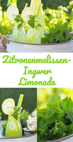 {Advertisement} With whom does the lemon balm always explode in the garden? I always have a lot of it … and it can make a very delicious lemonade. Pinched with a little ginger a little dream. In the Thermomix (or other kitchen machines) mixed in 1 minute. Smoothie Drinks, Smoothie Recipes, Smoothies, Travel Blog, Best Food Ever, Lemon Balm, Le Diner, Detox Recipes, Non Alcoholic