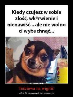 Happy Photos, Funny Photos, Haha Funny, Funny Cute, Animal Memes, Funny Animals, Polish Memes, Weekend Humor, Funny Mems