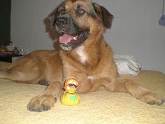 My dog, Still <3