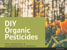 DIY Organic Pesticides for Natural Gardening Chicago Travel, Michigan Travel, Organic Insecticide, Organic Pesticides, Get Rid Of Ants, Pest Control Services, Natural Garden, Insect Repellent, Garden Soil