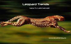 #Leopardtrends Week, disfruta de fabulosos descuentos www.ilovetrendy.co/promocion